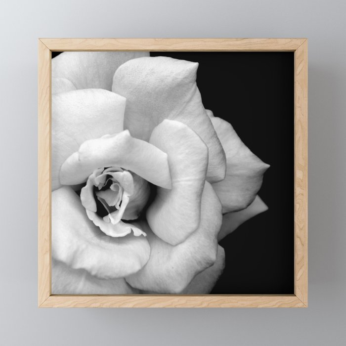 Rose Monochrome Framed Mini Art Print