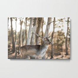 Deer, Stag nature photo art print   Pastel nature photography Metal Print