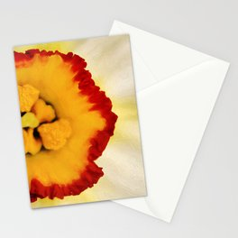 Painted Daffodil Macro Stationery Cards