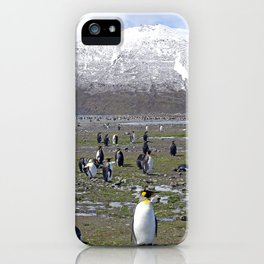 King Penguin Colony iPhone Case
