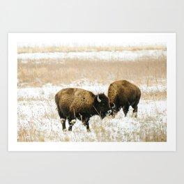 Bison · iv Art Print