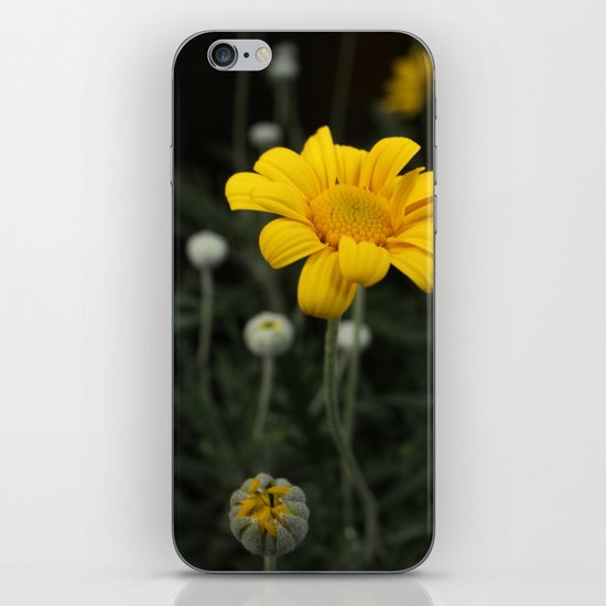 Spring - Chrysanthemum iPhone & iPod Skin