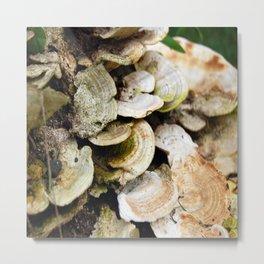 Fungus Metal Print