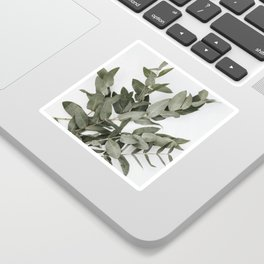 Eucalyptus Photography Sticker