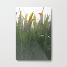 The Corns. Metal Print