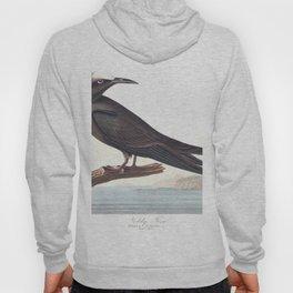 Noddy tern, Birds of America, Audubon Plate 275 Hoody