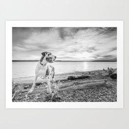 Harlequin Beach Sunset Art Print