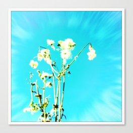 sun-flower Canvas Print