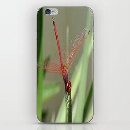 Beautiful Red Skimmer or Firecracker Dragonfly iPhone Skin