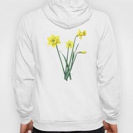 Yellow Daffodils Botanical Illustration Hoody