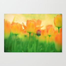 To Gather Orange Blossom Canvas Print