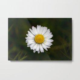 Daisy on dark background #5 Metal Print