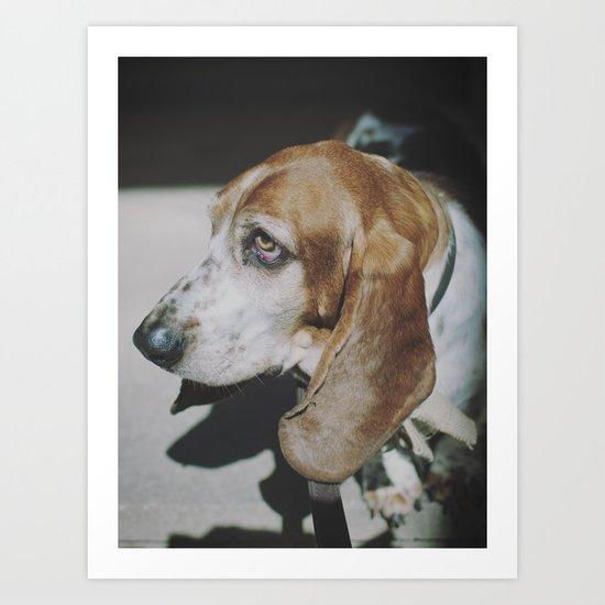 Tilly the wonderdog... Art Print