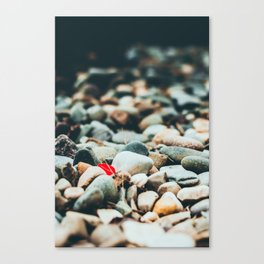 A Bit of Red Canvas Print