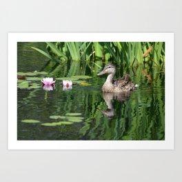 Momma Duck at Denver Botanic Gardens Art Print