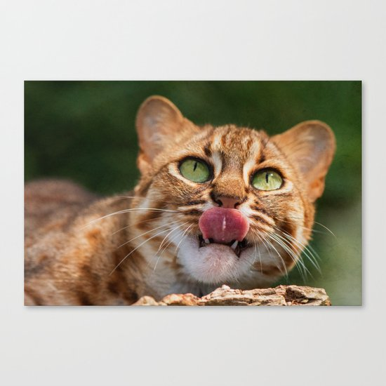 RUSTY SPOTTED CAT LICK Canvas Print