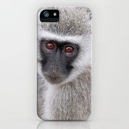 Little vervet monkey, Africa wildlife iPhone Case