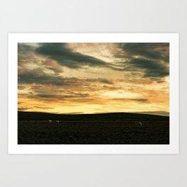 Iceland - Sunset with sheep (Leica M3 & Kodak film) Art Print
