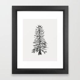 Cedar Tree Framed Art Print