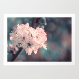 Delicate Strength (Spring White Cherry Blossom) Art Print
