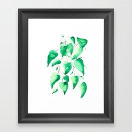 Heartleaf Philodendron Framed Art Print