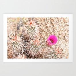 Prickly Pink Art Print