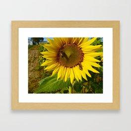 Sunflower Close up  Framed Art Print