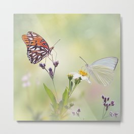 Gulf Fritillary and Great Southern White butterflies in a meadow Metal Print