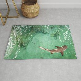 Look at the Shark Rug