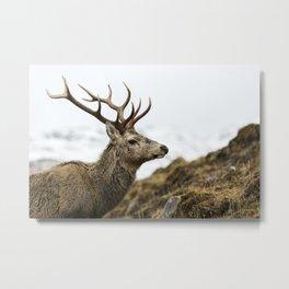 Royal Red Deer Stag Metal Print