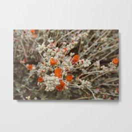 Orange Buds Metal Print