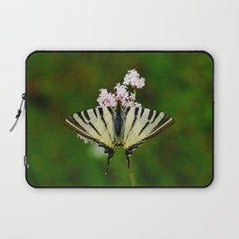 Scarce Swallowtail On Wild Garlic Flowers Laptop Sleeve