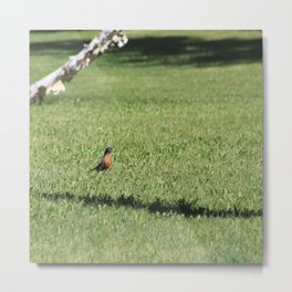 robin and dandelion Metal Print
