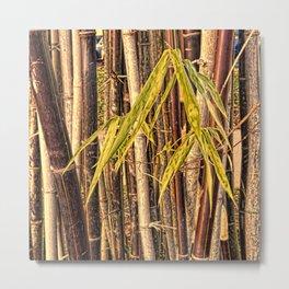 Grunge bamboo growth with warm light Metal Print