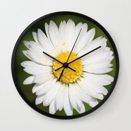 Closeup of a Beautiful Yellow and Wild White Daisy flower Wall Clock