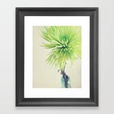spider mum Framed Art Print
