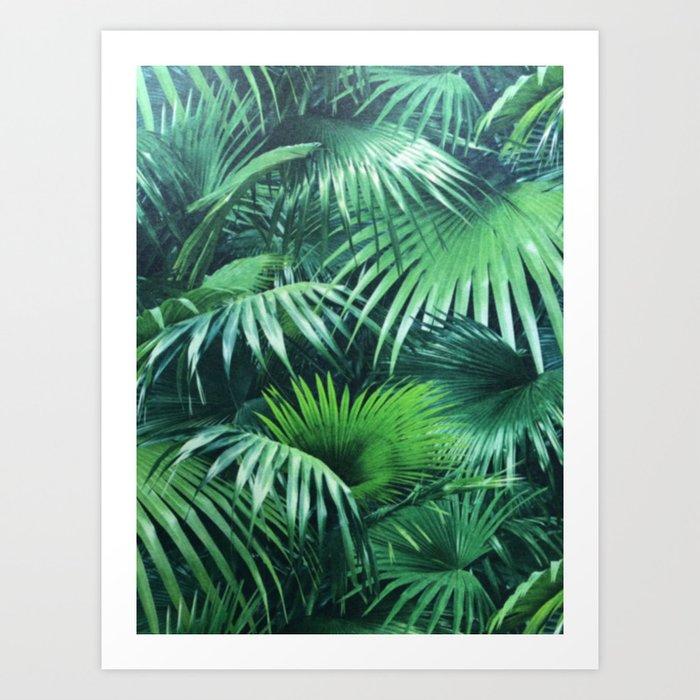 Tropical Botanic Jungle Garden Palm Leaf Green Kunstdrucke