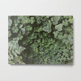 Wood Sorrel Metal Print