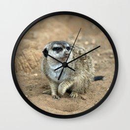 Meercat watching  Wall Clock