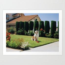 Biggs on Lawn Art Print