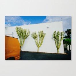 Fancy Cactus Canvas Print