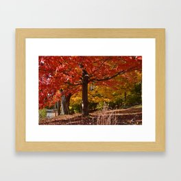 Maple Magic Framed Art Print