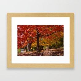 Maple Magic Framed Art Print