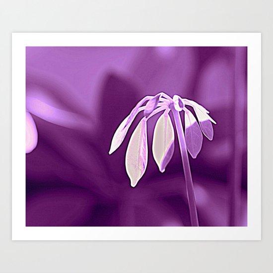Schefflera Art Print