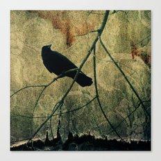 Old Curtain Canvas Print