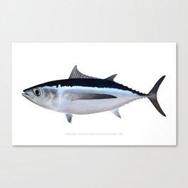 Albacore Tuna Canvas Print