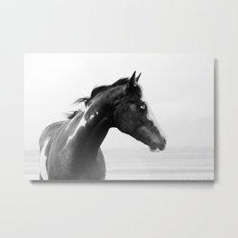 overo horse Metal Print