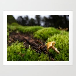 There once was a little mushroom in the forest Art Print