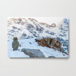 Kea parrot bird in the snow mountains of New Zealand Metal Print