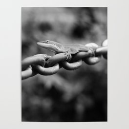 Anole on Chain II Poster